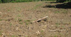 Different Farming Plots plus reforms