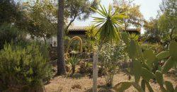 Established Olive Farm – Ronda