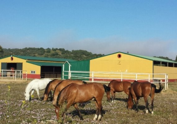 Owning a Horse in Spain