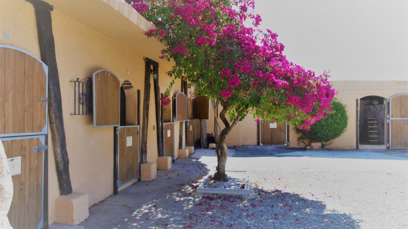 Stables plus Self-Catering Business