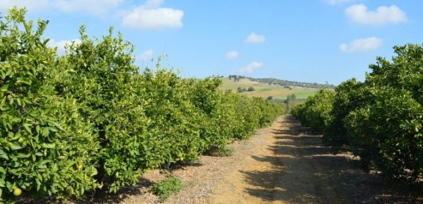 Productive Fruit Farm – Coín Valley