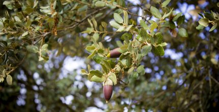 Productive Fruit Farm – Coín Valley