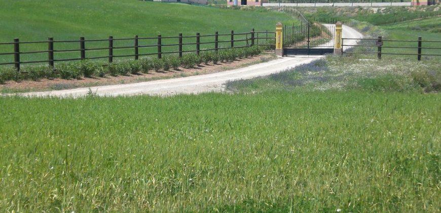 Horse Ranch near Campillos