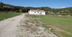 Horse Property plus 4-bed House
