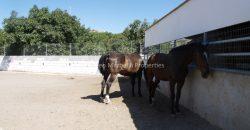 Charming Equestrian Property