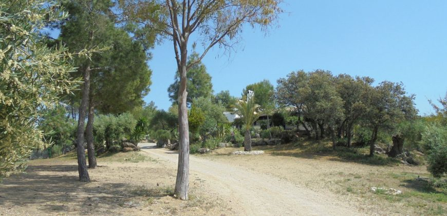 Established Olive Farm – Ronda