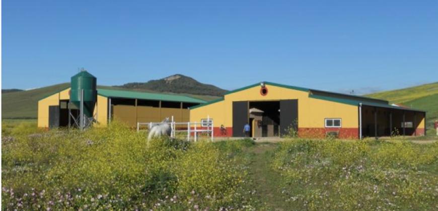 Successful Equestrian Centre