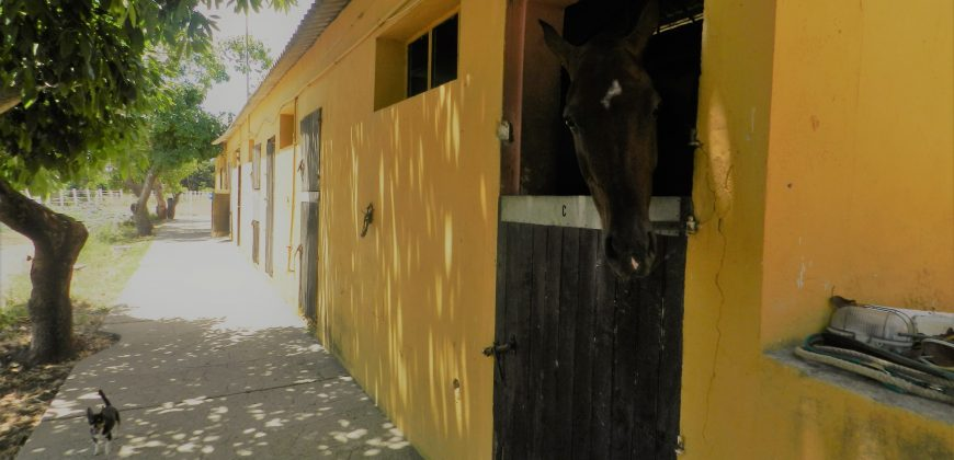 Equestrian Property – Large Stable Yard