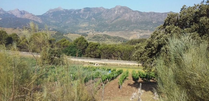 Vineyard plus investment opportunity