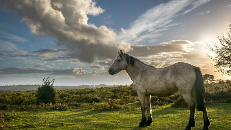Versatile Equestrian Property – Monda