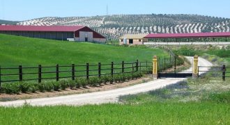 Horse Ranch near Campillos also Rent to Buy