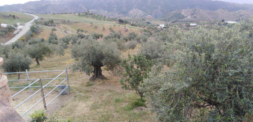 Lovely finca –  Casarabonela