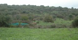 Unique finca near San Martin del Tesorillo